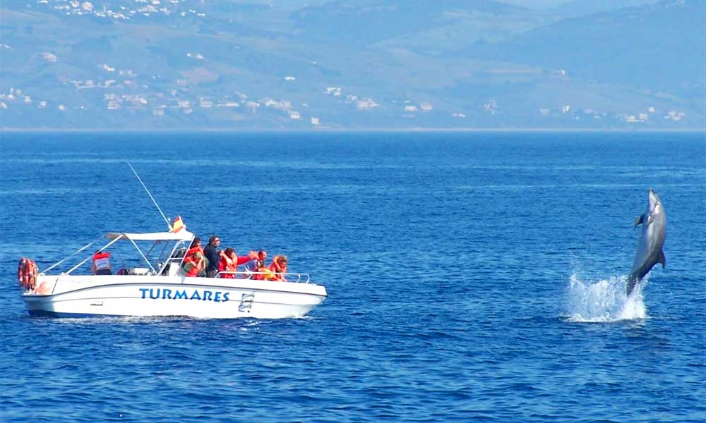 Whale Watching in Marbella