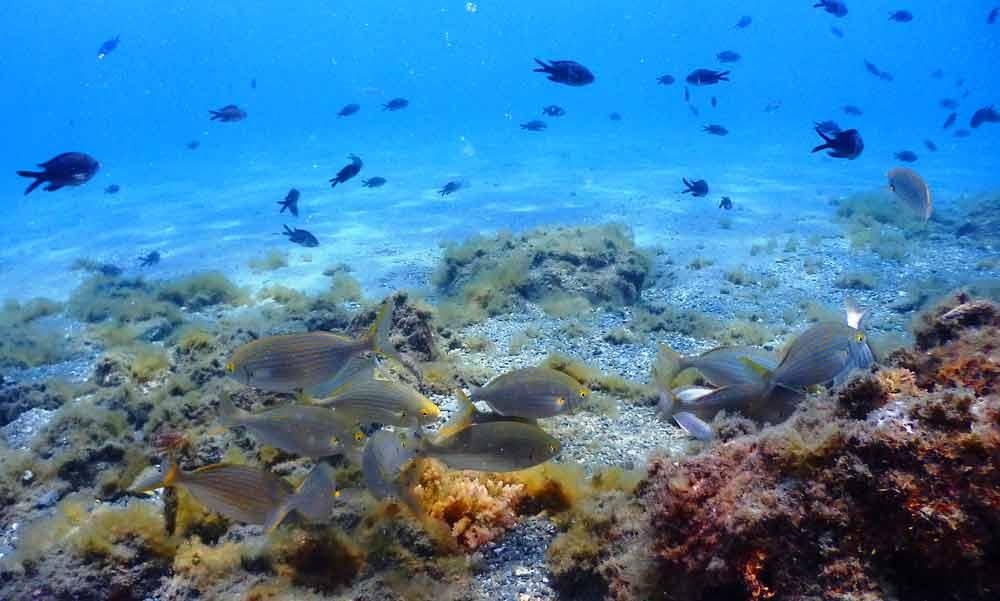 Diving Marbella